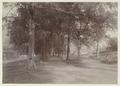 KITLV - 2961 - Kurkdjian - Soerabaja - Kerklaan at Banda - circa 1901.tif