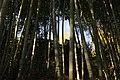 Kabecho Oaza Imaida, Asakita Ward, Hiroshima, Hiroshima Prefecture 731-0234, Japan - panoramio (1).jpg