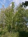 Khimselyshche, Cherkasy, Cherkas'ka oblast, Ukraine - panoramio (78).jpg