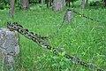 Klūgu kapsēta, Pumpuri, Skrundas pagasts, Skrundas novads, Latvia - panoramio (3).jpg
