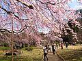 Koishikawa Korakuen1.jpg