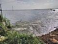 Kole Wetlands IMG 20170629 125854 (26).jpg