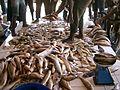 Kribi - marché aux poissons.JPG