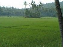 KurunthayaVayal.jpg