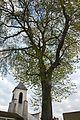 L'arbre de la Liberté.jpg