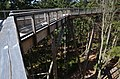 Lávka na Cestě v korunách stromů - panoramio (1).jpg