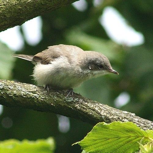 Птица 6 букв сканворд