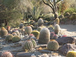 Image illustrative de l'article Living Desert Zoo and Gardens
