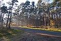 LSG Forst Rundshorn IMG 2298.jpg
