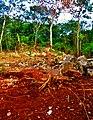 La tierra de Tekom, Yucatán.jpg