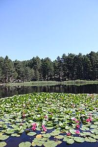 Lac de Crenu 1.jpg