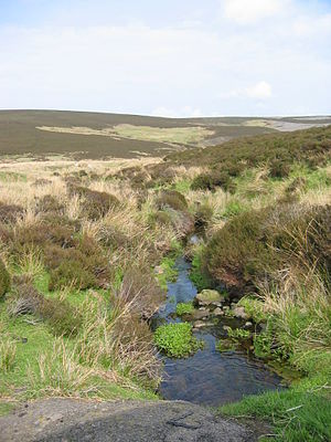 Lucia di Lammermoor - Lammermuir Hills, Scotland