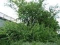 Landschaftsschutzgebiet Naturpark Melle Üdinghausen-Warringhof 04.jpg