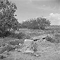 Landschap bij Askalon met archeologische resten, Bestanddeelnr 255-1453.jpg