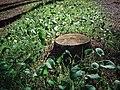 Larache Forest Plants 2.jpg