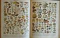 Larousse illustré Augé-planche-champignons.jpg