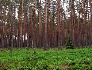 Temperate coniferous forest - A pine forest is an example of a temperate coniferous forest