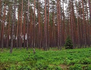 Temperate coniferous forest biome