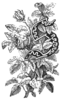 Laste sõber, 3 jagu; initial; wood engraving.png