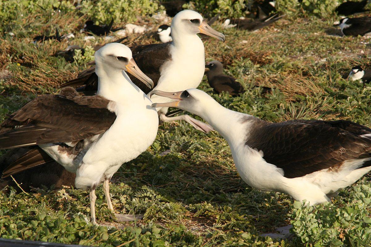 Донские альбатросы книга скачать