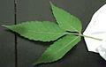 LeafPattern.JPG