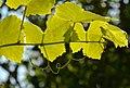 Leaves-2871588.jpg