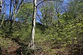 Leitenwälder der Isar 0577.jpg
