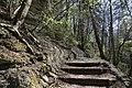 Leitenwälder der Isar 0602.jpg