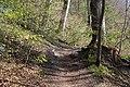 Leitenwälder der Isar 0654.jpg
