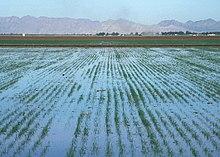 wet farming definition