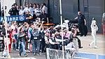 Lewis Hamilton (33130757255).jpg