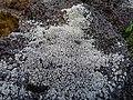 Lichen et mouche... - panoramio.jpg
