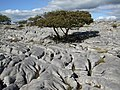 Limestone pavement at Newbiggin Crags - geograph.org.uk - 551913.jpg