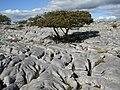 Limestone pavement at Newbiggin Crags - geograph.org.uk - 551913.jpg