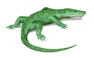 Reptiliomorpha - Limnoscelis.