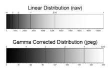 Comparison of linear and gamma-corrected tonal ranges, showing how each stop is recorded.