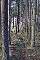 Links Wood - geograph.org.uk - 311881.jpg