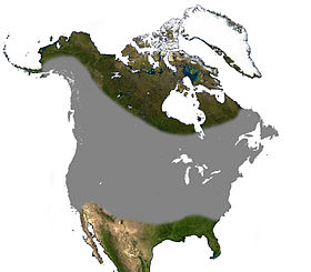 Little Brown Bat North America Range.jpg