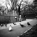 Little Girl With Pigeons (145931123).jpeg