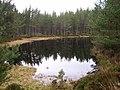 Lochan in Glenmore Forest - geograph.org.uk - 344509.jpg