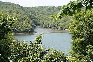 Merthen Manor - View of Merthen Woods on the Helford River
