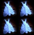 Luminous Moths.png