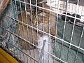 MTP Cat Show P2230043.JPG
