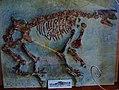 Macrotherium sansaniense composite skeleton.JPG