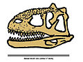 Majungasaurus skull 404.jpg