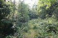 Mallusjoki metsa1.jpg