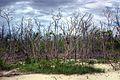 Mangroven (3031751504).jpg