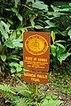 Manoa Falls Trail (8330303739).jpg