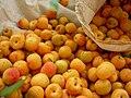 Many apricots.JPG