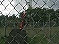 Maszt radiowo-telewizyjny RTCN Katowice-Kosztowy w Mysłowicach - mocowanie liny.jpg